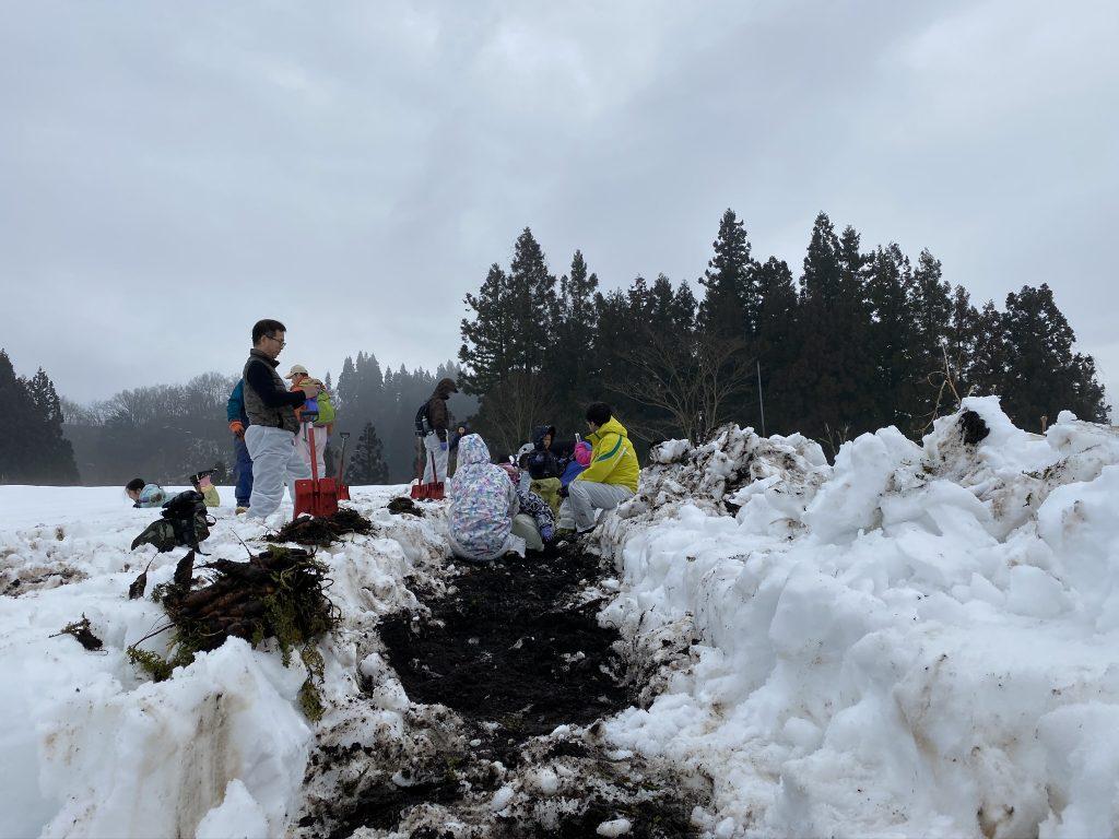 雪下ニンジン収穫体験